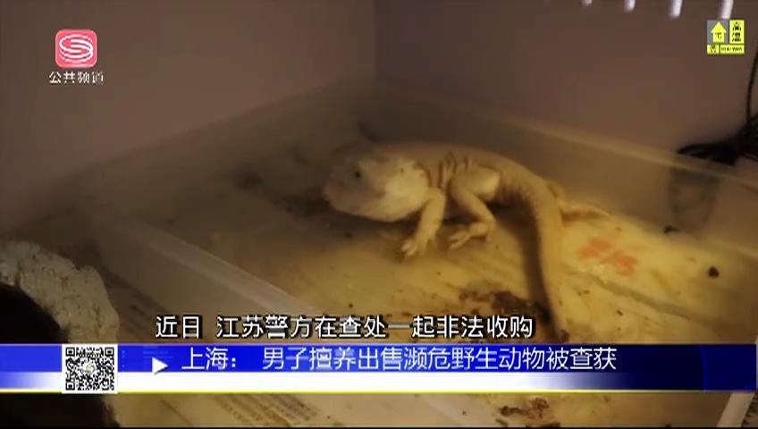上海:男子擅养出售濒危野生动物被查获